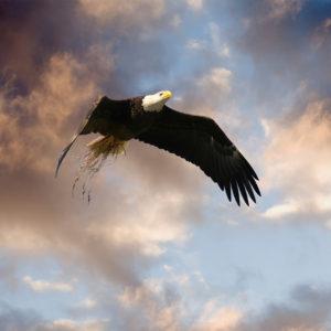 Eagle Nest Inc Flite Class